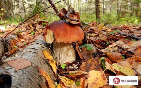 Лесной зем. участок 22.44 сотки, ПМЖ, Новая Моква, 30 км. Калужское ш. - Фото 3