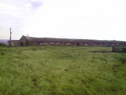 Продается ферма с животными на участке 60 га, с. Темнолесская - Фото 3