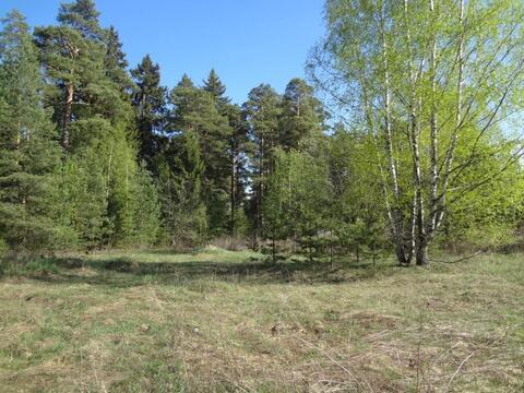 Участок рядом с сосновым бором - Фото 1