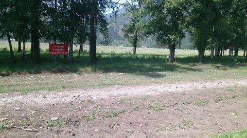 Продам участок у дороги. Село Чемал. Торг. ИЖС - Фото 3