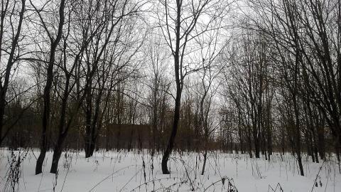 Каширское ш.48 км от МКАД г.о.Домодедово в с.Вельяминово участок23сот - Фото 2