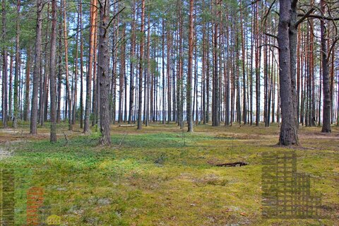 Земельный участок 75 соток (ИЖС) на берегу озера Селигер, Тверская обл - Фото 3