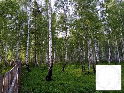 40 соток с лесом на станции Овинный - Фото 2
