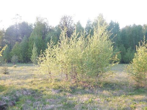Участок 20 соток в п. Дорохово около леса - Фото 3