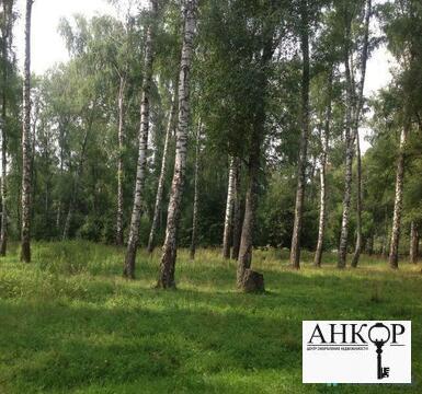 Земельный участок 15 соток лпх с взрослыми березами д. Дулово - Фото 2