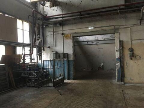 Сдам производственное помещение 527 кв.м, м. Черная речка - Фото 4