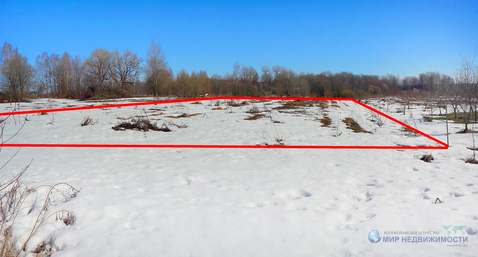 15 соток без строений в деревне Княжево Волоколамского района МО - Фото 3