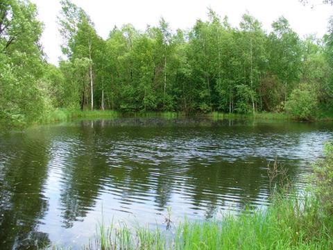 Участок в лесной д.Владычино у реки Пра, Клепиковского района. - Фото 1