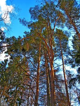 Земельный участок 5 га (500 сот.) на берегу Истринского водохранилища - Фото 3