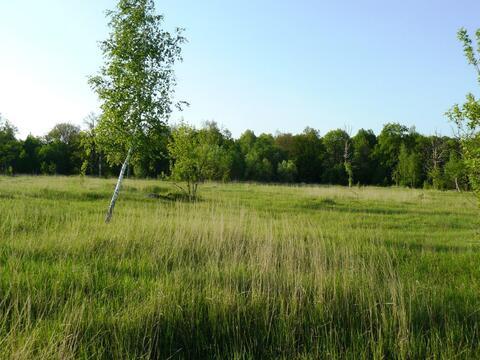 Ушаковка деревня участок 18,55 гектар Заокский район Тульская область - Фото 3