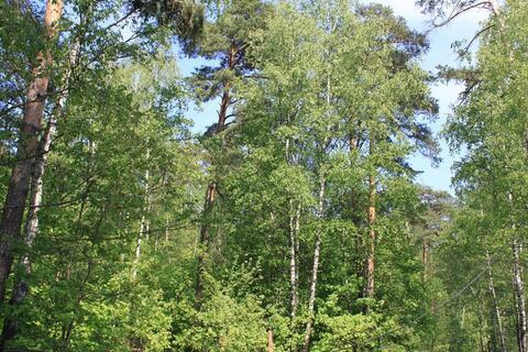 Лесной участок с соснами со всеми коммуникациями в жилом посёлке - Фото 2