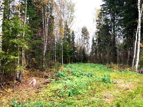 Участок с лесными деревьями д. Новинки 47км. от МКАД по Дмитровскому ш - Фото 5