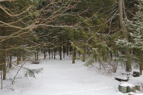 Лесные Дали СНТ - Фото 4