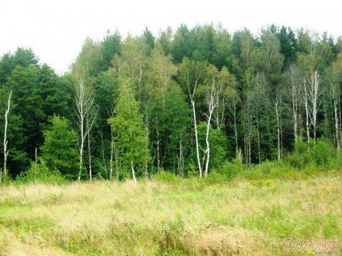 Участки от собственника в жилой деревне Акулово - Фото 3