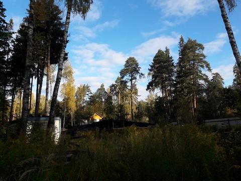 Лесной участок 10 соток - Фото 1