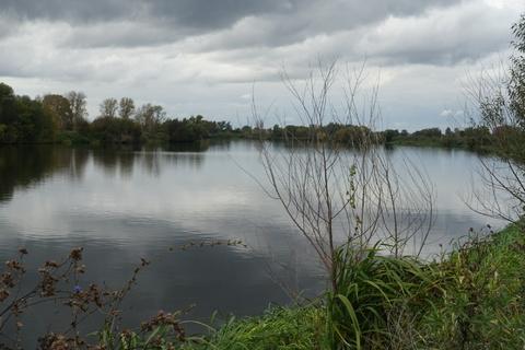 Участок у леса и озера - Фото 1