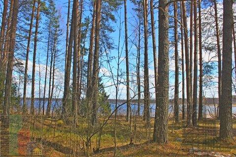 Земельный участок 75 соток (ИЖС) на берегу озера Селигер, Тверская обл - Фото 2