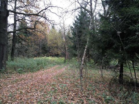 Участок 4 или 8 соток, у леса, на берегу реки г. Климовск, СНТ Дубрава - Фото 4