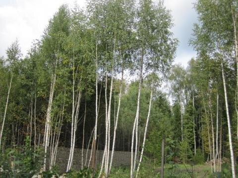 Лесной участок 10 сот, газ, охрана, Киевское ш, 49 км. от МКАД. - Фото 3