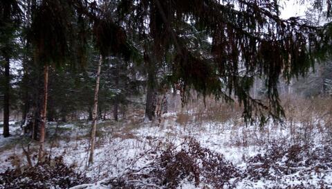 Продам: Земельный участок 10 сот, Верхний Тагил, Маяковского, 50 - Фото 3