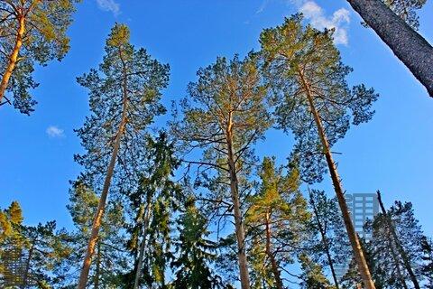 Участок 880 соток на первой линии Истринского водохранилища в лесу - Фото 4