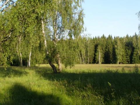 30 соток, лес на участке, 115 км. от МКАД, западное направление. - Фото 3