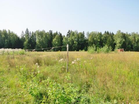 50,7 сот в лесу за 8 млн руб (торг) - Фото 1