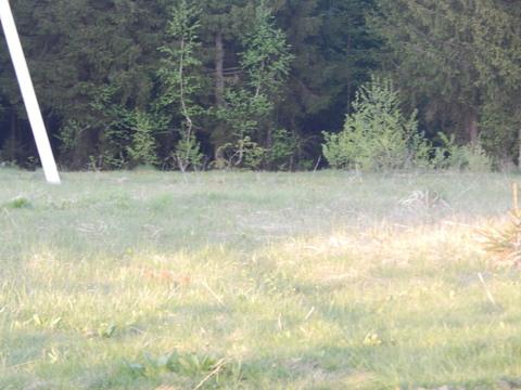 Участок 20 соток в п. Дорохово около леса - Фото 4