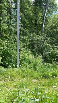 Симферопоьлкое шоссе 47 км. участок в деревне с лесными деревьями - Фото 2