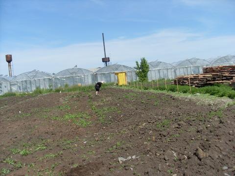 Земельный участок в п. Черницк - Фото 1