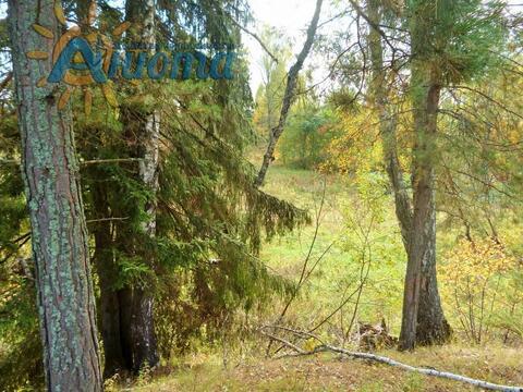Продается березовая роща 35 кв. метров в жуковском районе - Фото 2