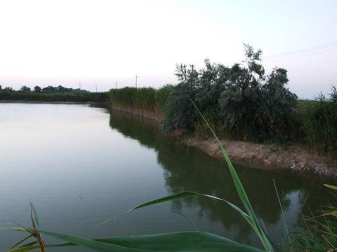 Продаю земельный участок общей площадью 156 га Крым - Фото 4