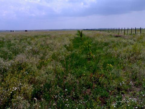 Продаю участок 2 гектара на побережье Азовского моря в Крыму - Фото 2