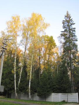 Кубинка - 60. Лесной участок 12 соток со всеми коммуникациями. - Фото 3
