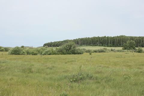 Продается земельный участок с\х в Пышминском р-не Свердловской области - Фото 3