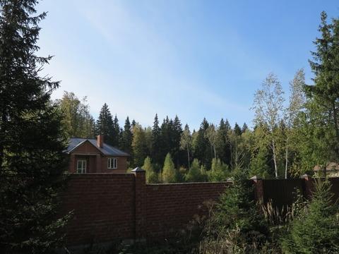 Большой участок 40 соток с лесными деревьями. Газ. Охрана. - Фото 5