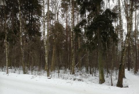 Балашиха, ст Металлург, напротив Кучинского лесопарка - Фото 4