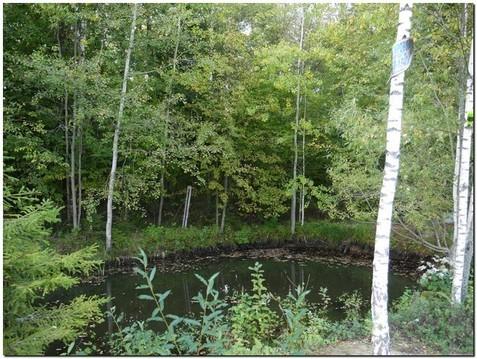 Прекрасный участок 6 соток на опушке лес рядом с Троицком ! - Фото 5