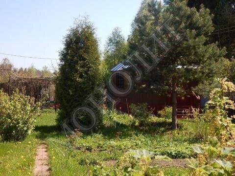 Дача 40 кв.м. деревня Кощейкино Пушкинского района СНТ Связист - Фото 4