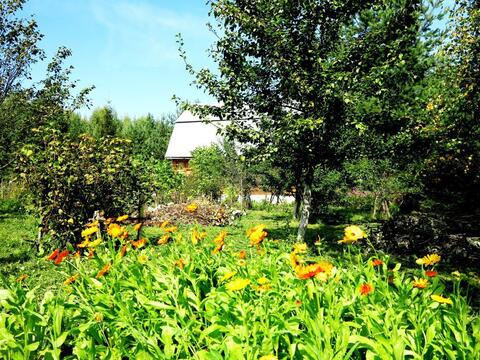 Участок-сад 9 соток, рядом озеро и лес. Магистральный газ. 45 км МКАД. - Фото 5