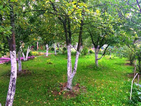 Лесной городок. 7 сот с летним домом. 15 км. от МКАД - Фото 3