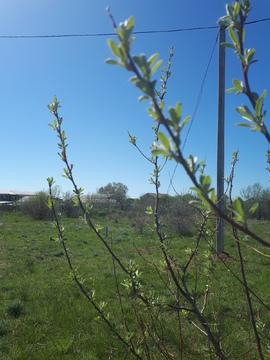 Предлагаем земельный участок 11 сот в курортном посёлке Новоотрадное - Фото 1