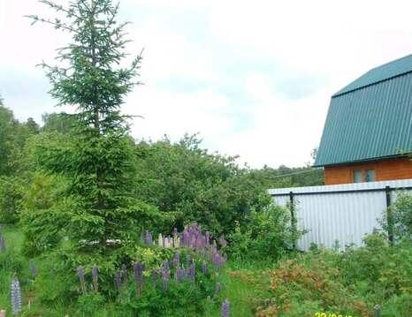 Эксклюзив! Продается дача рядом с деревней Кривское, выход в лес. - Фото 4
