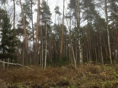 Участок 12 сот. на опушке леса. Красиво, тихо, идеальный подъезд 40км - Фото 4