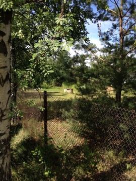 Продаётся зем.участок 15 соток в д. Башарино Кимрского района - Фото 4