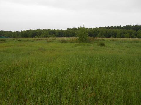 Участок в лесной д.Владычино у реки Пра, Клепиковского района. - Фото 3