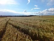 Продам массив земель с/х назначения в Смоленской области - Фото 5