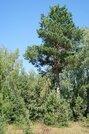 Участок 1 Га на 1 линии р. Волга с лесным массивом, г. Конаково - Фото 5