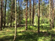 Лесной участок 10 соток д.Копнино ИЖС - Фото 1