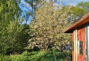 Участок 4,7 сотки у леса, на берегу реки. г. Климовск, СНТ Дубрава - Фото 3